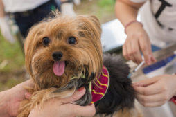 vacinas-caninas